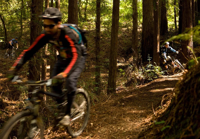 Redwoods_v-2_10320wip1v1
