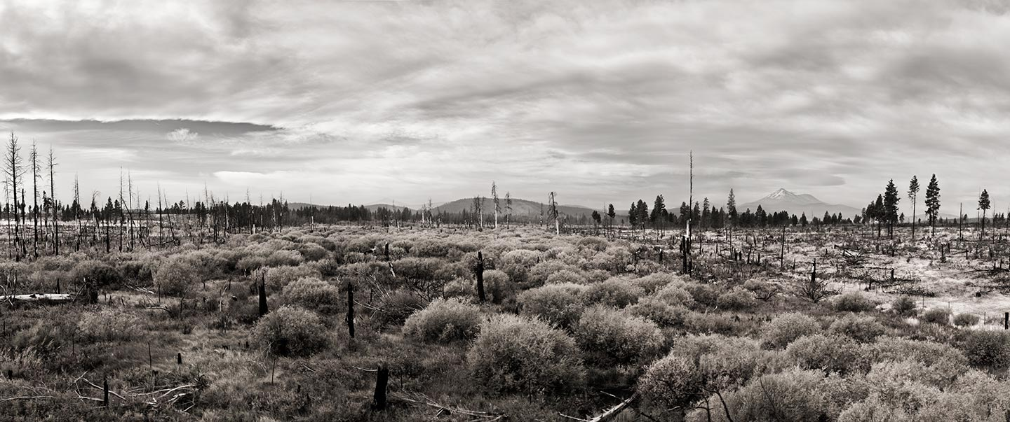 black and white image of a field
