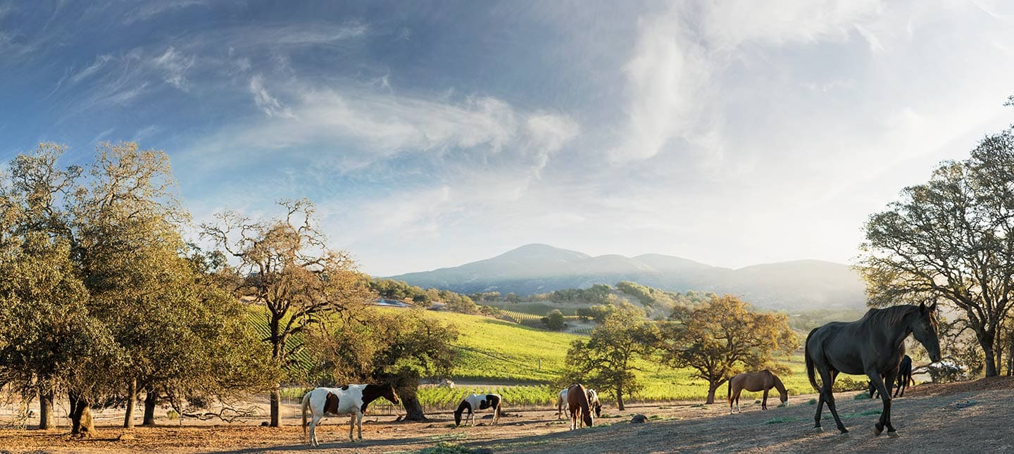 Image Horses Grazing in Lush Field Against a Bright Blue Sky